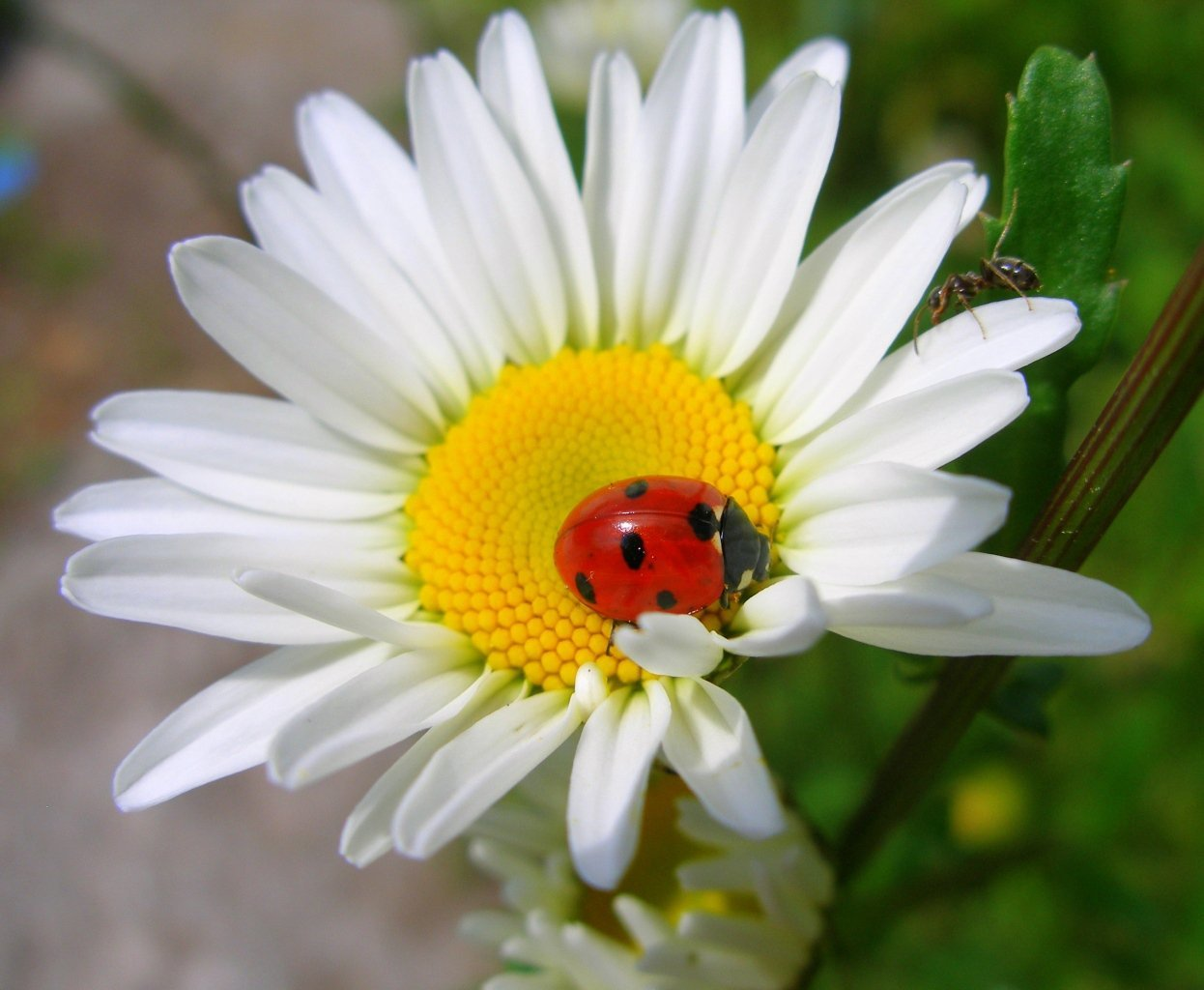 Цветы картинки на аву вконтакте
