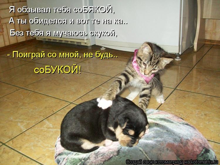 Рад, картинки котят и щенков с надписями