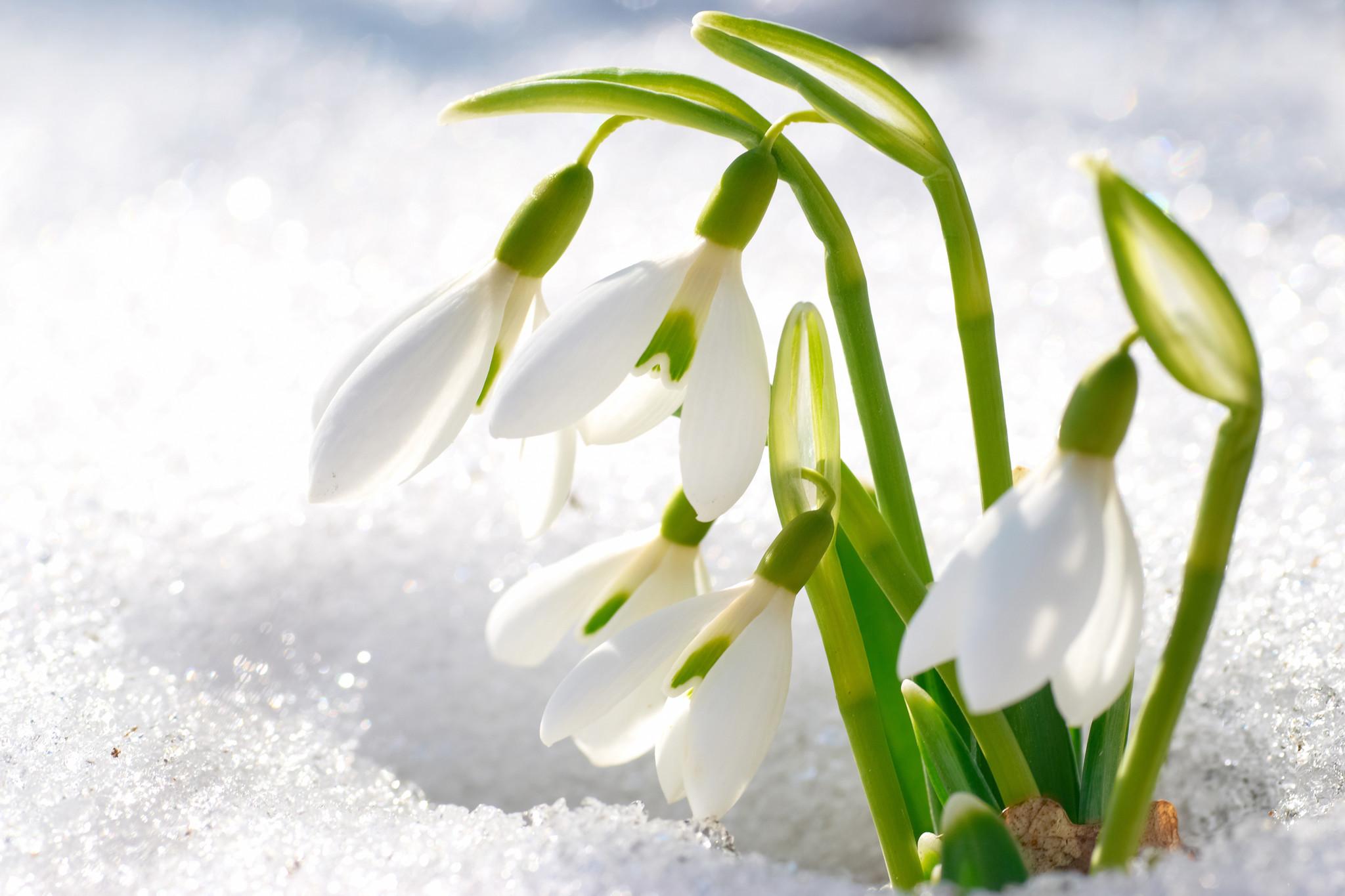 самом красивые открытки про весну и солнышко вам сделать ваших